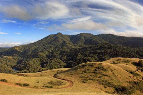 Mt Tam from Bald Hill