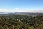Finding a home in Scott Valley neighborhood, Mill Valley, CA