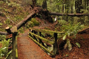 Bridge over stream in Steep Ravine, Mount Tamalpais, CA