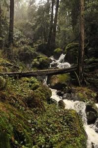 Cascading stream, Mount Tamalpais, CA