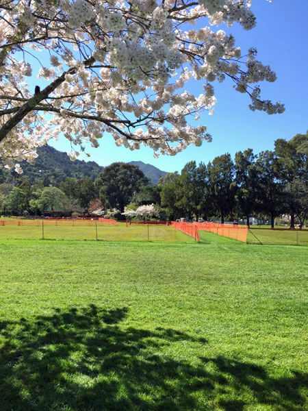 Corte Madera Town Park with Mt. Tam