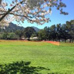 Springtime Maintenance for Your Marin Home