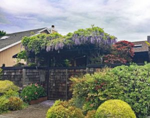 Wisteria at Larkspur Marina Home