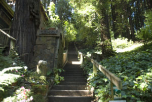 Second set of steps on Dipsea race