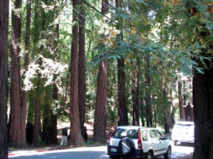Muir Woods Marin County